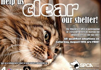 Help Us Clear The Shelter