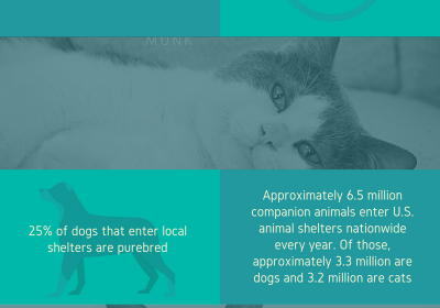 Facts About Animal Homelessness