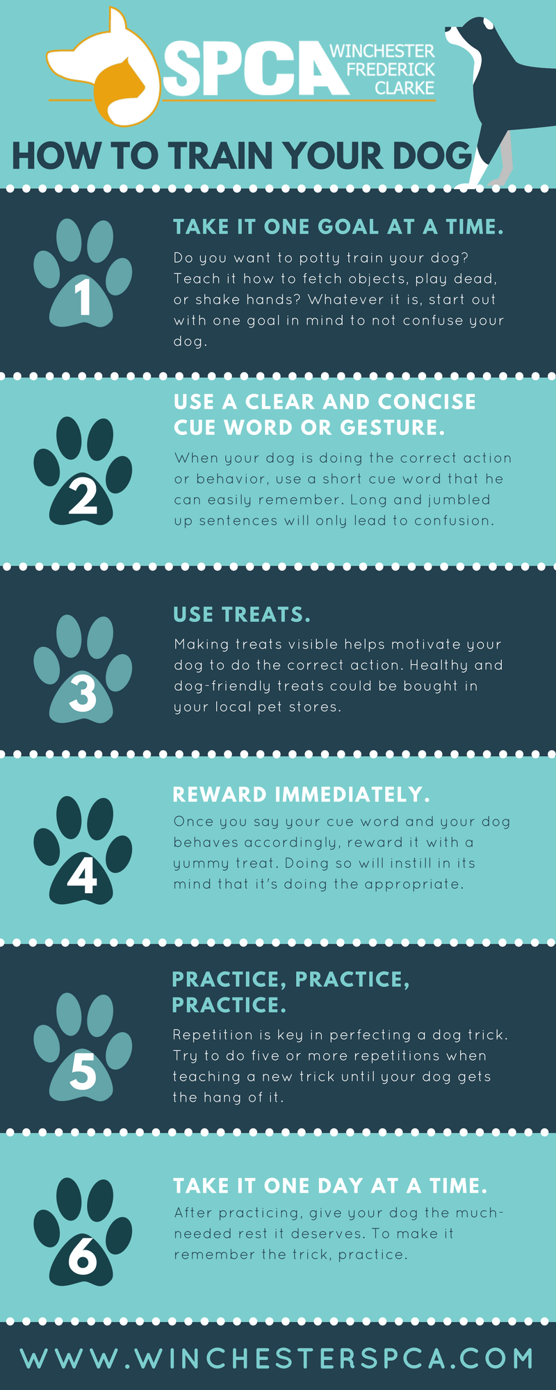 6 Steps to Training Your Dog
