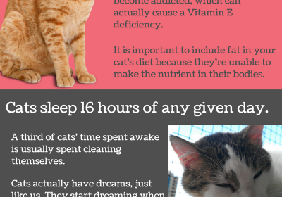 Facts You Should Know As A Cat Owner