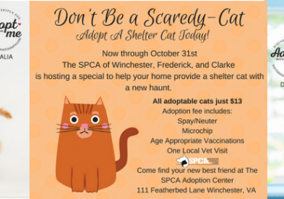 Adopt a shelter cat today!